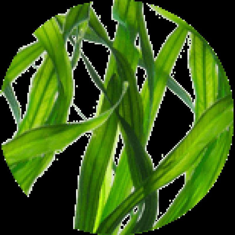 Биогель из ламинарии – универсальное средство для вашего здоровья