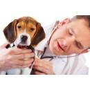 Дисбактериоз животных